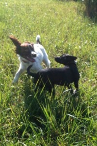 Dogs happily playing together